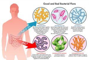 29466432 - intestinal bacterial flora