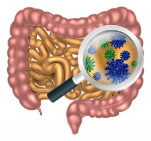 48126707 - magnifying glass focused on the human digestive system, digestive tract or alimentary canal showing bacteria or virus cells. could be good bacteria or gut flora such as that encouraged by pro biotic products and foods
